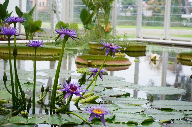 The Biodiversity Garden: una passeggiata dallequatore ai poli ...