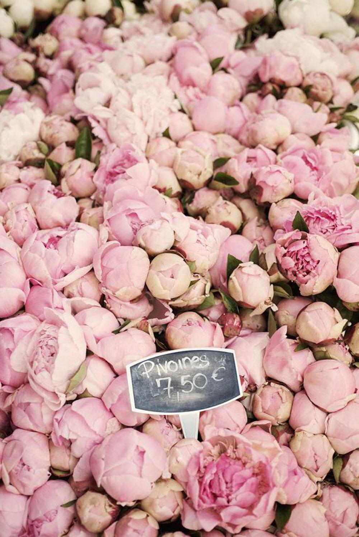 wanderlust-viaggiare-amore per i viaggi-peonie rosa