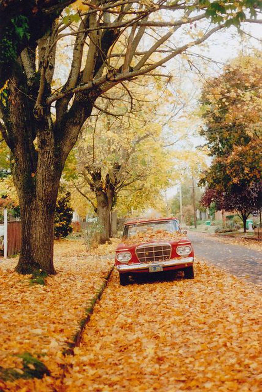 guardare il colore delle foglie-viaggio in new england
