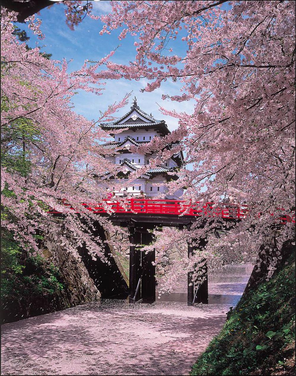 posti da vedere nel mondo | fioritura dei ciliegi in giappone