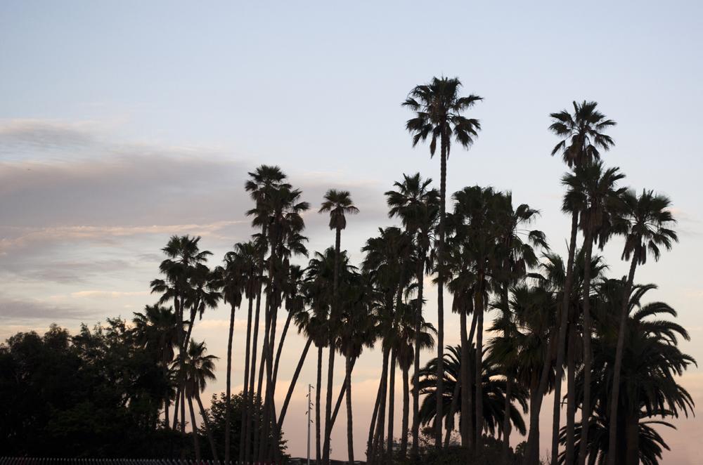 diario di viaggio in california tra palme e tramonti a Santa Monica