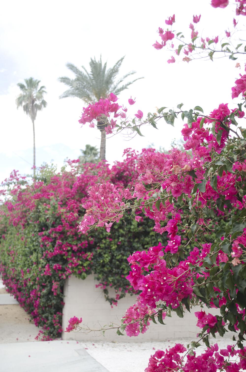 giardini lussireggianti a palm springs visti seguendo l'itinerario in california