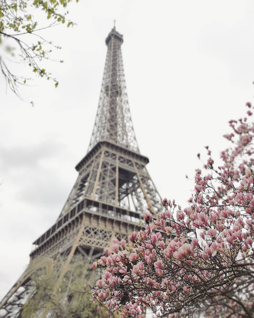 cosa fotografare a parigi: la tour eiffel decorata da fiori rosa