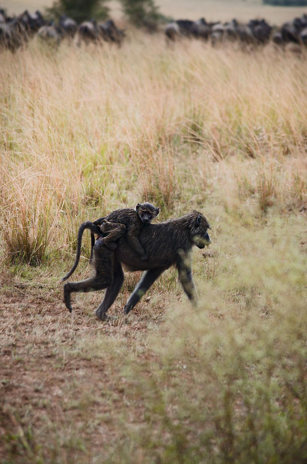 come organizzare un viaggio in kenya: safari