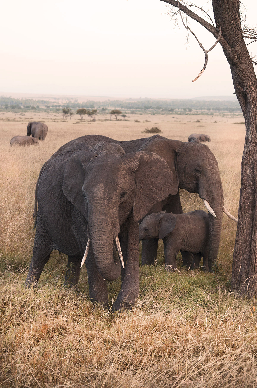 kenya: safari nel masai mara