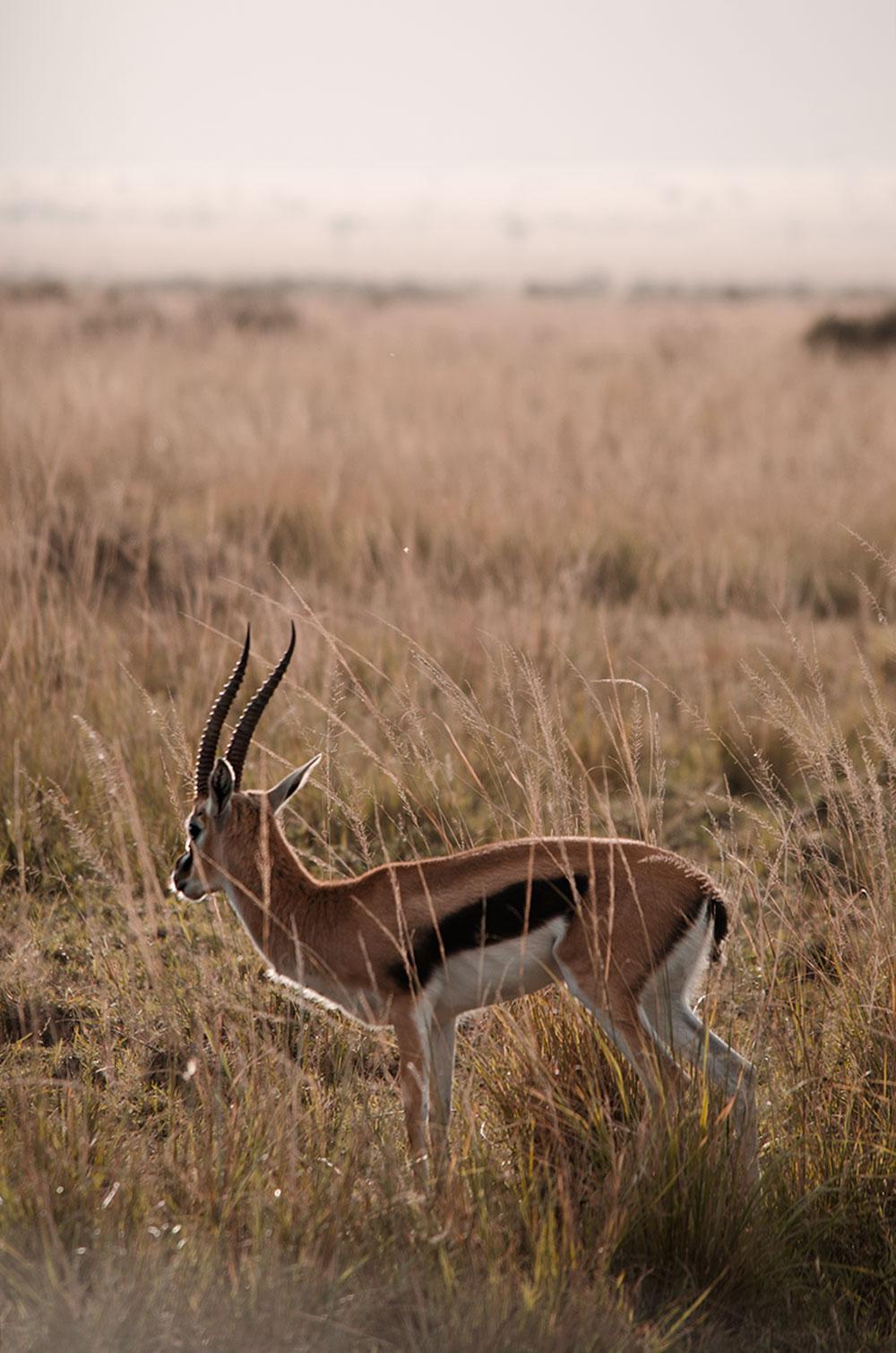 safari kenya: ecco come organizzarlo