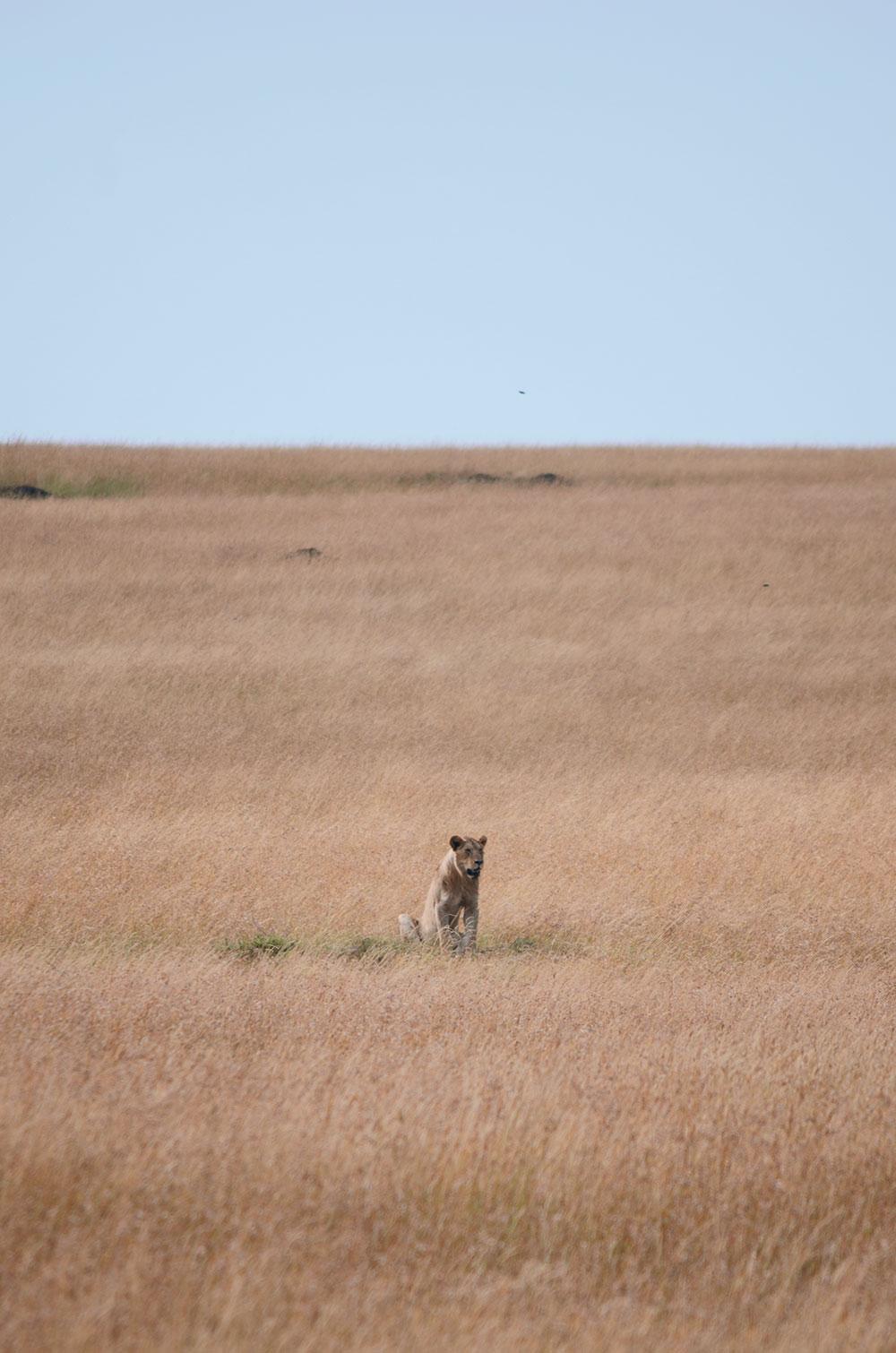 safari durante un viaggio in kenya