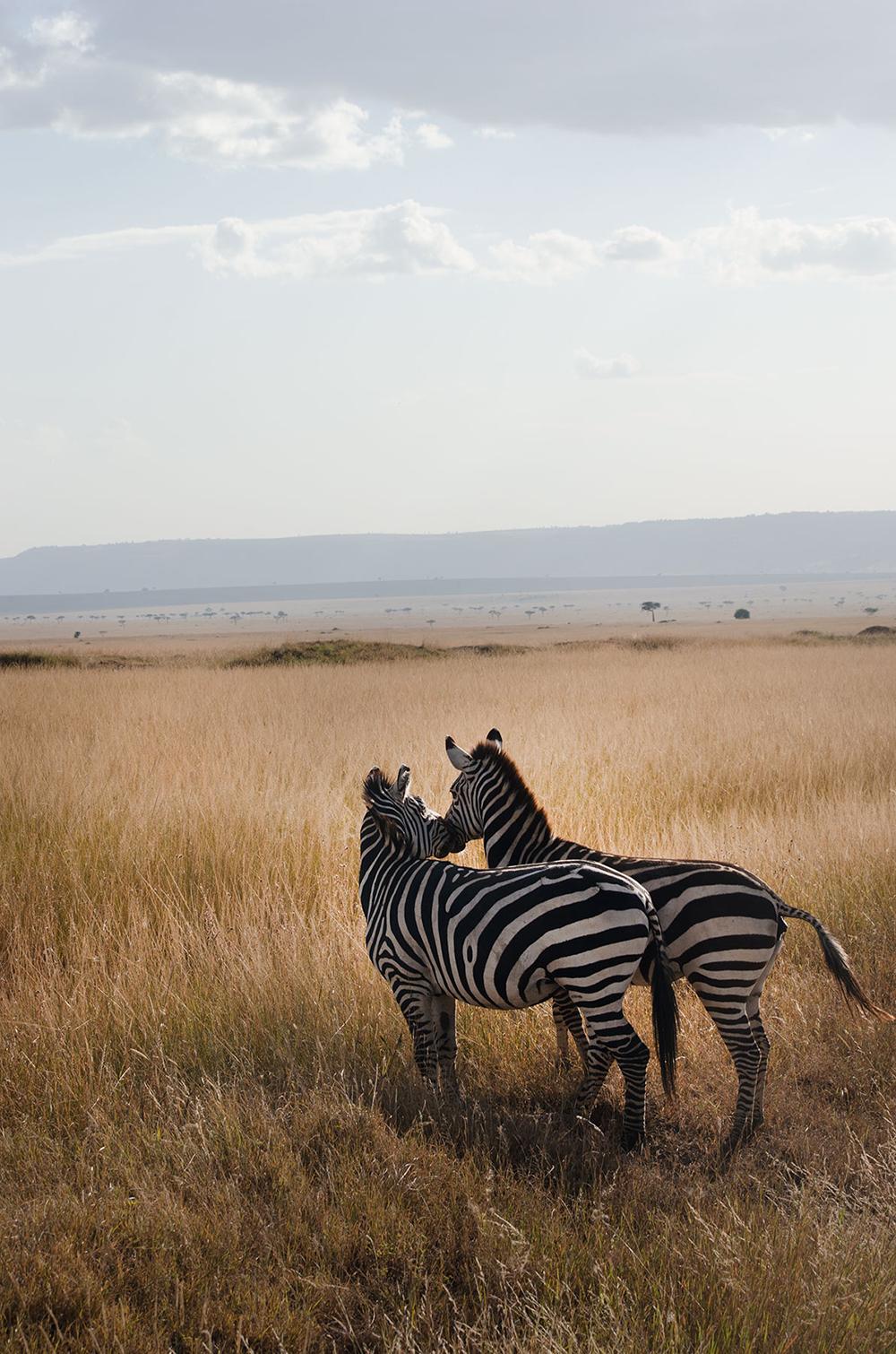 safari nel masai mara: come fare