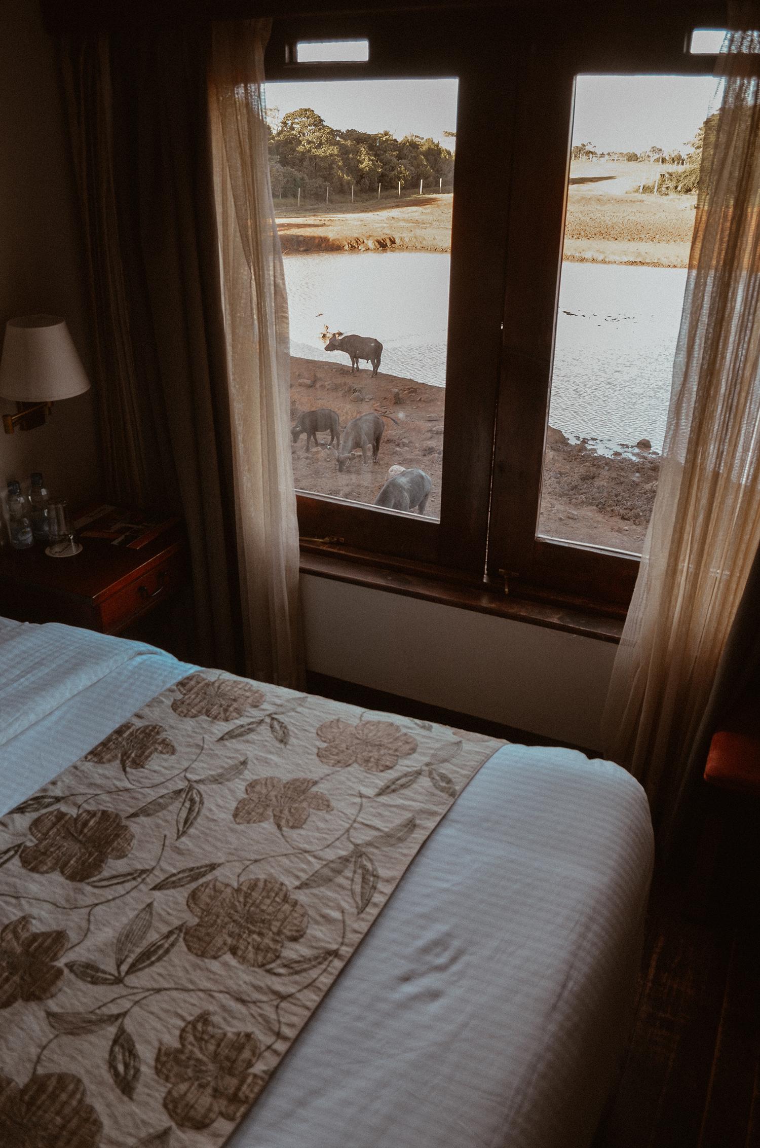 treetops lodge dove dormire kenya regina elisabetta