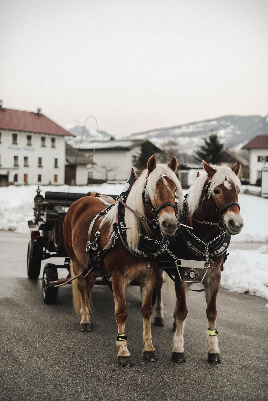 carrozza cavalli inverno austria