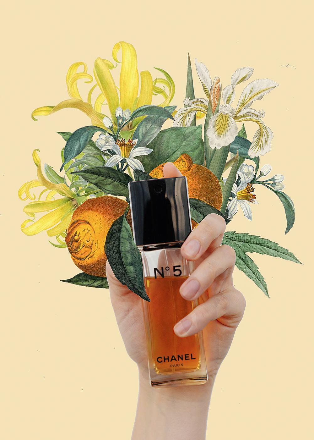 chanel n 5 famiglia olfattiva fiorita